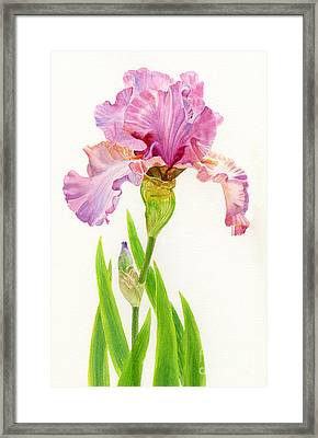 Pink Iris With Leaves Framed Print by Sharon Freeman