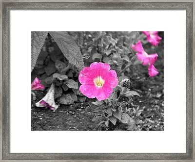 Pink Framed Print by Jessica Burgett