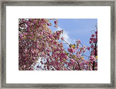 Pink Framed Print by Krista  Corcoran Photography