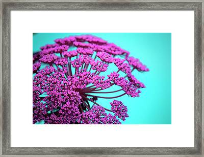 Pink Lace 02 Framed Print