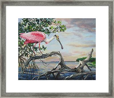 Pink Lady Framed Print by Dianna  Willman