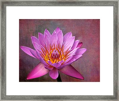Pink Lady Framed Print