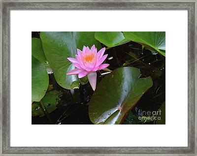 Pink Lady Framed Print by Robyn King