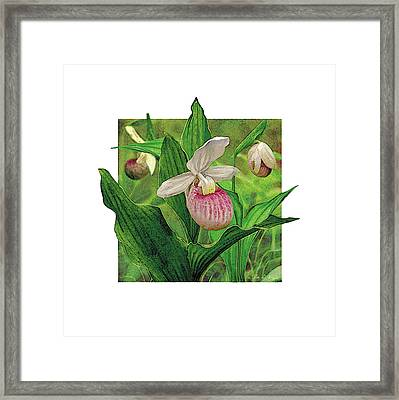 Pink Lady Slipper Framed Print by JQ Licensing