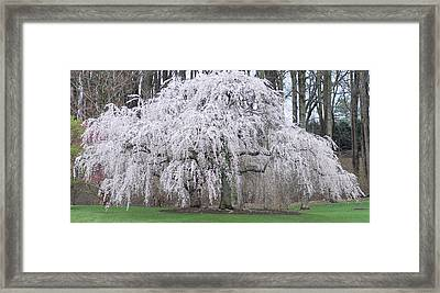 Pink Lady Two Framed Print by Don  Wright
