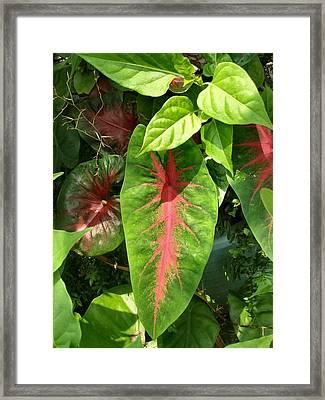 Pink Leaves Framed Print by Kathy Daxon