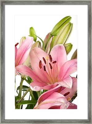Pink Lilies 07 Framed Print by Nailia Schwarz
