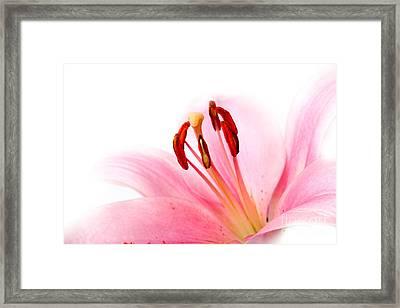 Pink Lilies 08 Framed Print by Nailia Schwarz