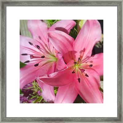 #pink #lilly Detail. Love The #colors Framed Print