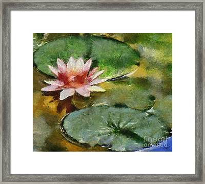 Pink Lilly Framed Print