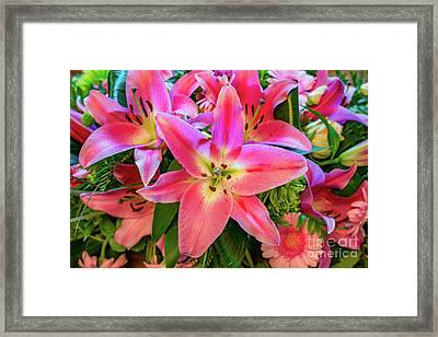 Pink Lily Framed Print by Adrian Evans