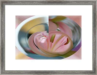 Pink Lily In A Bowl Framed Print by Lyn  Perry