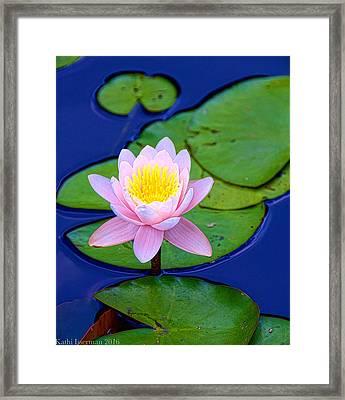 Pink Lily Framed Print
