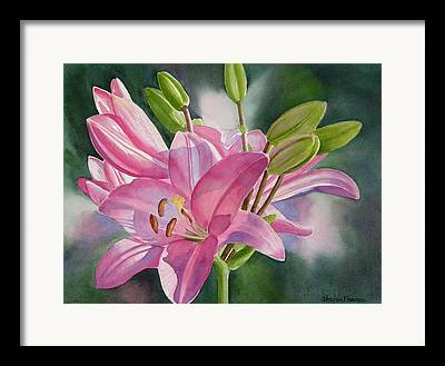Asiatic Lily Framed Prints