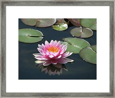 Pink Lily With Reflection Framed Print