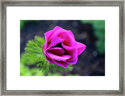 Pink Lips Framed Print