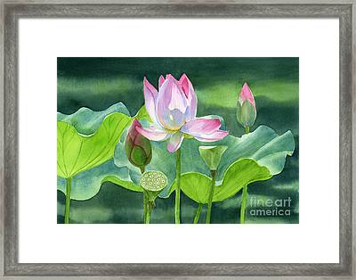 Pink Lotus Blossom  Buds And Seed Pods Framed Print by Sharon Freeman