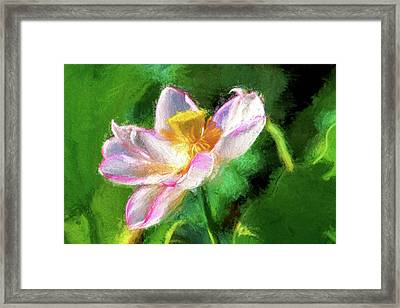 Pink Lotus Framed Print by Geraldine Scull