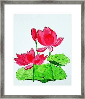 Pink Lotus Framed Print by Joseph Frank Baraba