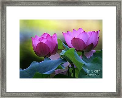 Pink Lotus Framed Print by Sabrina L Ryan