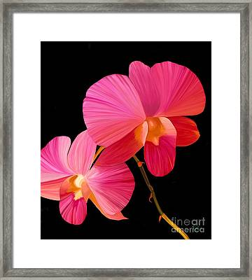 Pink Lux Framed Print by Rand Herron