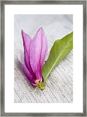 Pink Magnolia Flower Framed Print by Frank Tschakert