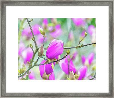 Pink Magnolia  Framed Print