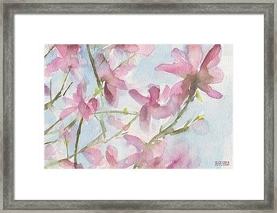 Pink Magnolias Blue Sky Framed Print by Beverly Brown
