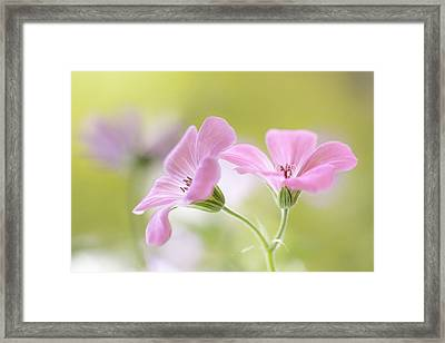 Pink Melody Framed Print