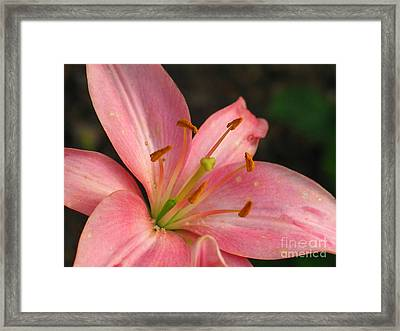 Pink Framed Print by Arabella Marie