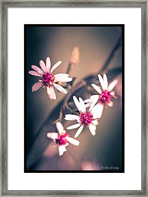 Framed Print featuring the photograph Pink by Michaela Preston