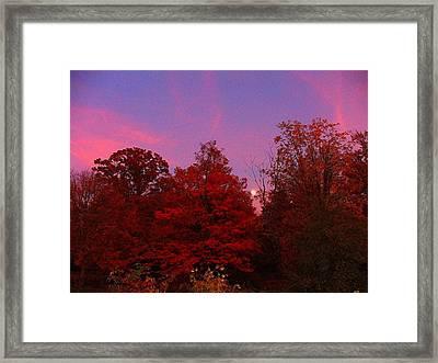 Pink Moonlite Night Framed Print by Judy  Waller