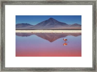 Pink Morning Framed Print by Margarita Chernilova