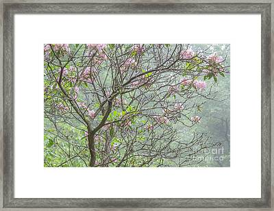 Framed Print featuring the photograph Pink Mountain Laurel by Chris Scroggins