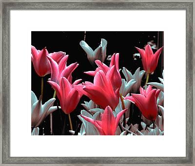 Pink N Silver Tulips Framed Print by Irma BACKELANT GALLERIES