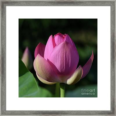 Pink Nirvana 3304 Framed Print by Terri Winkler