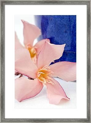 Pink Oleander Flowers Framed Print by Frank Tschakert