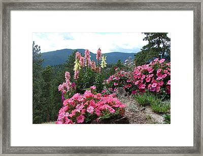 Pink On The Mountain Framed Print by Jody Neumann