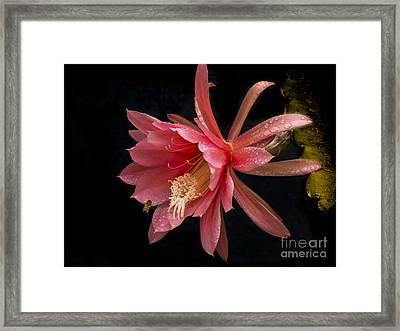 Pink Orchid Cactus Flower Framed Print