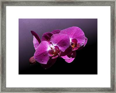 Pink Orchid Flowers Framed Print