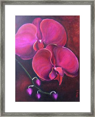 Pink Orchid Framed Print by Silvia Philippsohn