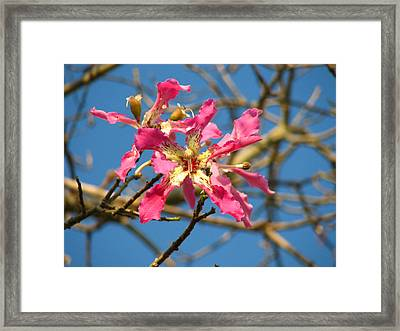 Pink Orchid Tree Framed Print by Carla Parris