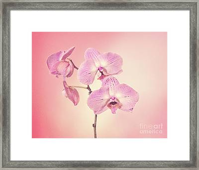 Framed Print featuring the photograph Pink Orchids 2 by Linda Phelps
