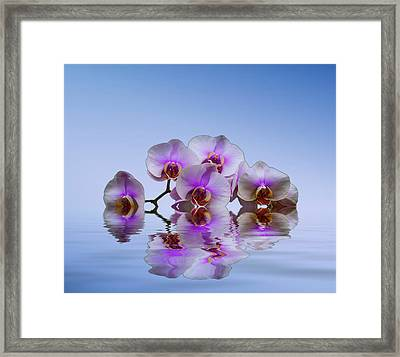 Pink Orchids Blue Background Framed Print by David French