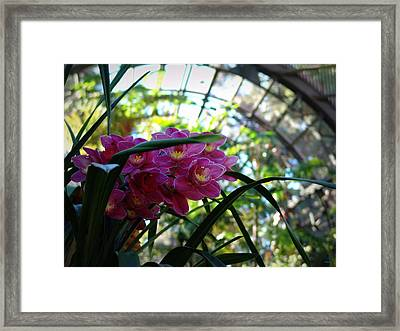 Pink Orchids Framed Print by Glenn McCarthy Art and Photography