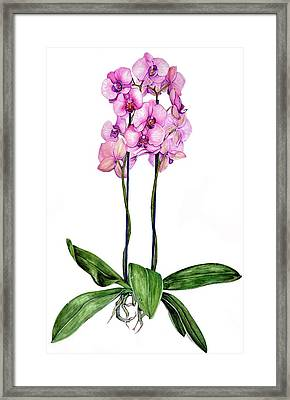 Framed Print featuring the painting Pink Orchids by Heidi Kriel
