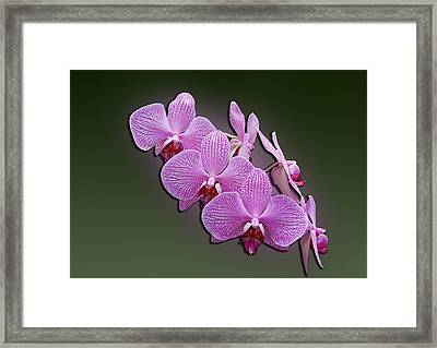 Framed Print featuring the photograph Pink Orchids by John Haldane