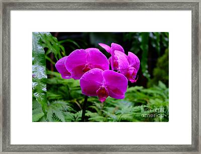 Pink Orchids Framed Print by Mini Arora
