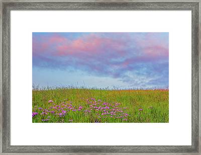 Pink  Over Pink  Framed Print