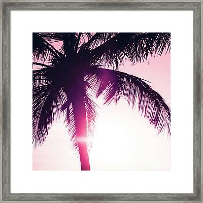 Pink Palm Tree Silhouettes Kihei Tropical Nights Framed Print by Sharon Mau